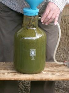 Biogas Gärbiologie Bildung